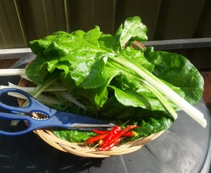 Fresh veggies cut from our veggie patch.